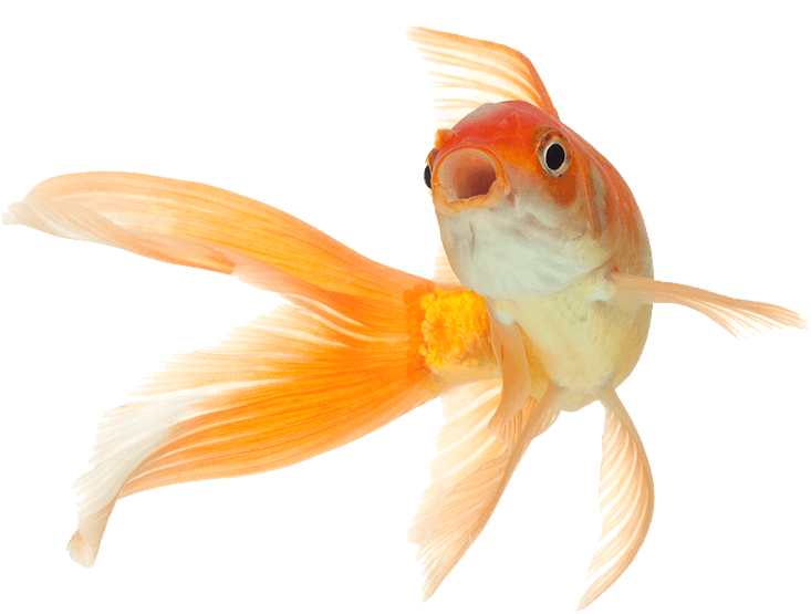 sunny articulos para mascota pez - SUNNY | Artículos para Mascotas
