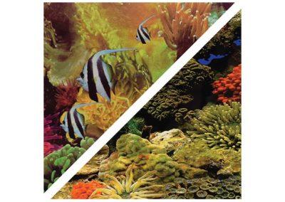 artículos para mascota peces respaldo para acuarios c050230 400x284 - Decoración Acuario