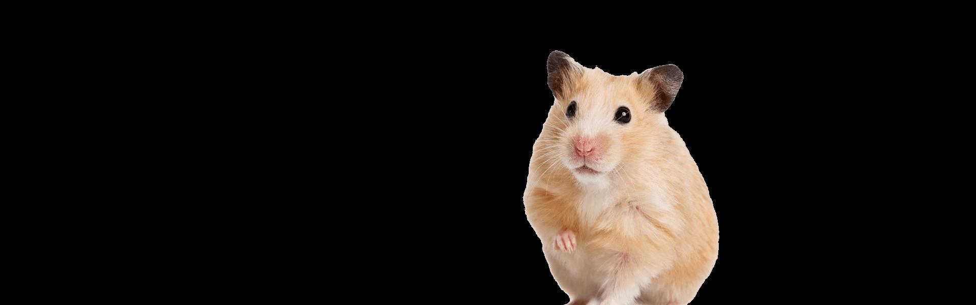 sunny articulos para mascota seccion perros roedor - Sunny | Productos y Accesorios para roedores | México