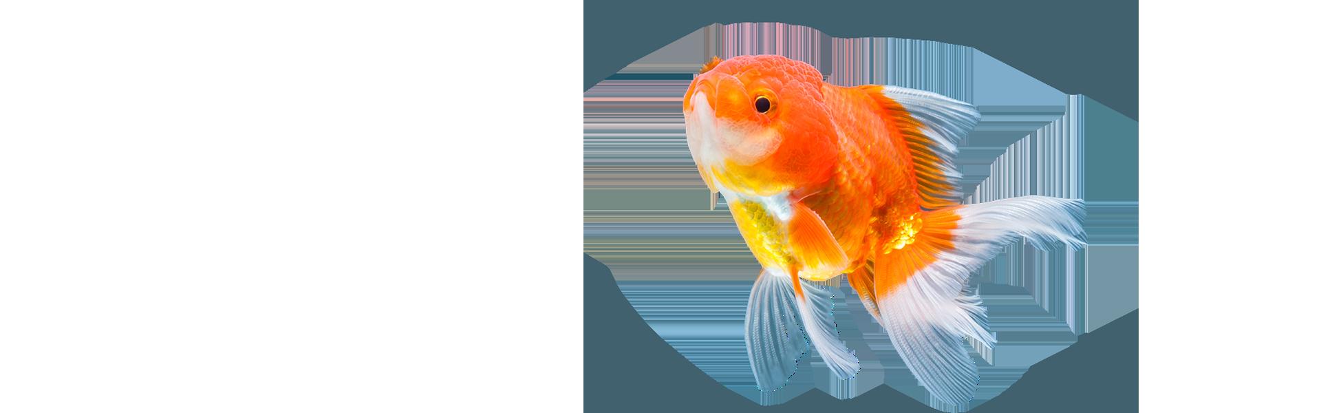 sunny articulos para mascota seccion pez - Sunny | Productos y Accesorios para Peceras de Agua Dulce | México