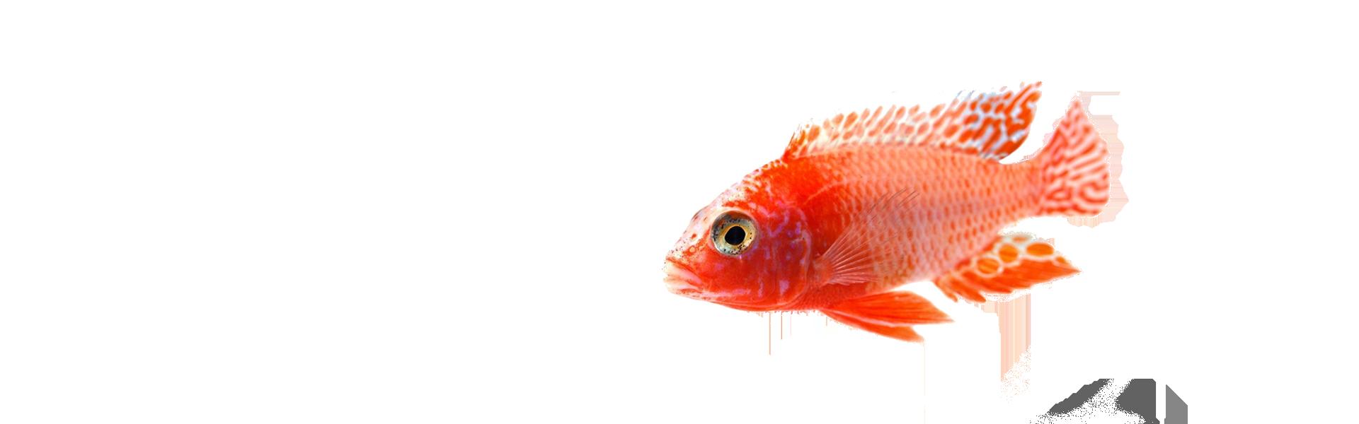 sunny articulos para mascota seccion pez2 - Sunny | Productos y Accesorios para Peceras de Agua Salada | México