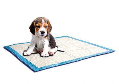 entrenadores SP 3808 400x284 - Entrenadores para perro